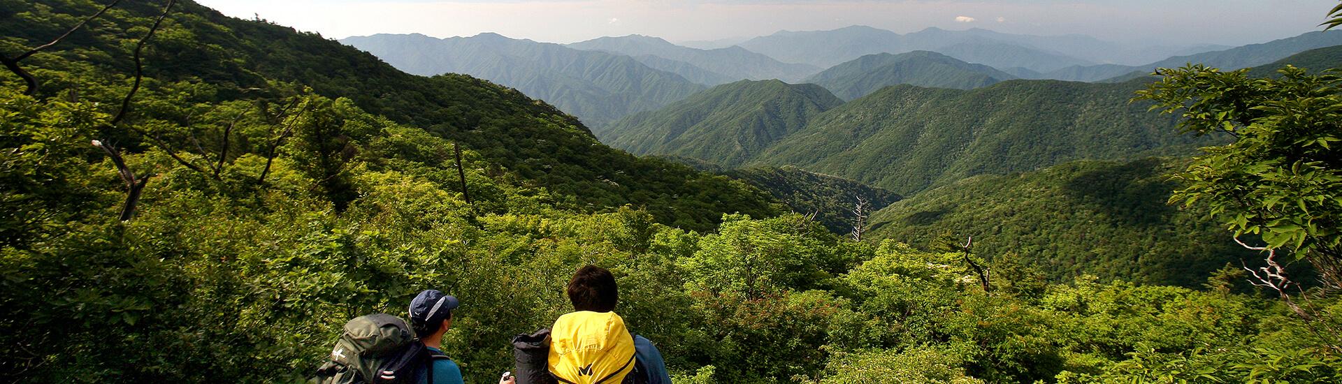 韓国の山の写真
